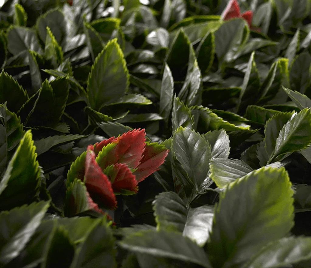 follaje artificial laurel para jardines verticales
